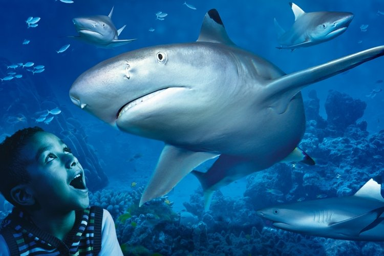 Merlin Appoints Strange for Sea Life, the Dungeons and Legoland® Discovery Centre campaigns